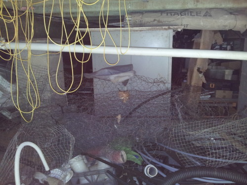 Believe it or not there is a birds nest in the middle of the roll of wire netting how they built it in there is