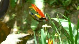 Our male Sunbird