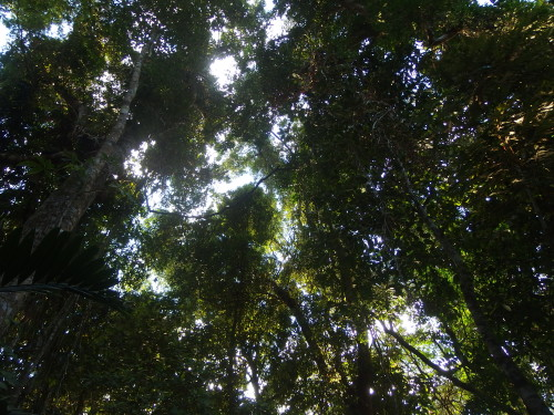 Looking up in to the canopy.