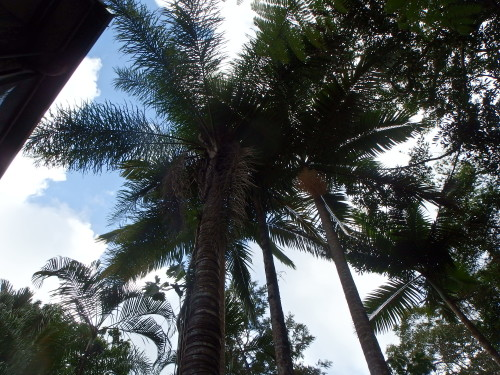 Looking up to the palm head.