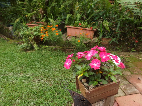 Some strong colour in the garden.