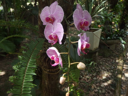 Orchids are blooming again in the garden they add such exotic colour to all the greens.