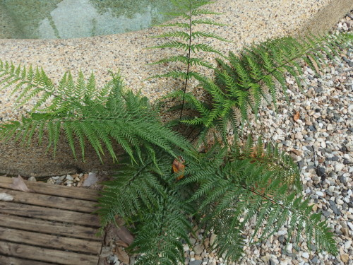 Dainty ferns grow were they shouldn't.