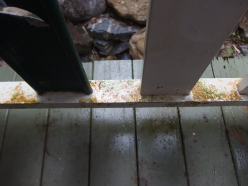 This rail is specially coated against mould???