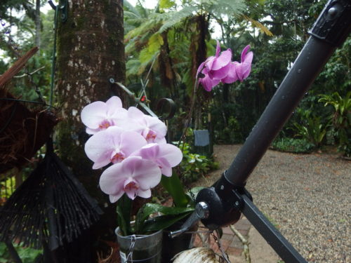 My orchids survived the storm!